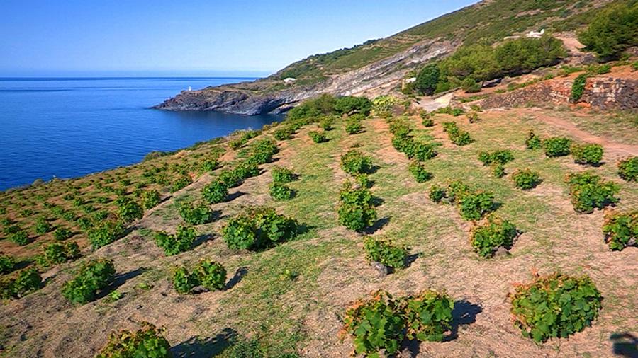 Pantelleria Doc Festival Map