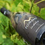 Un unico vitigno la Falanghina