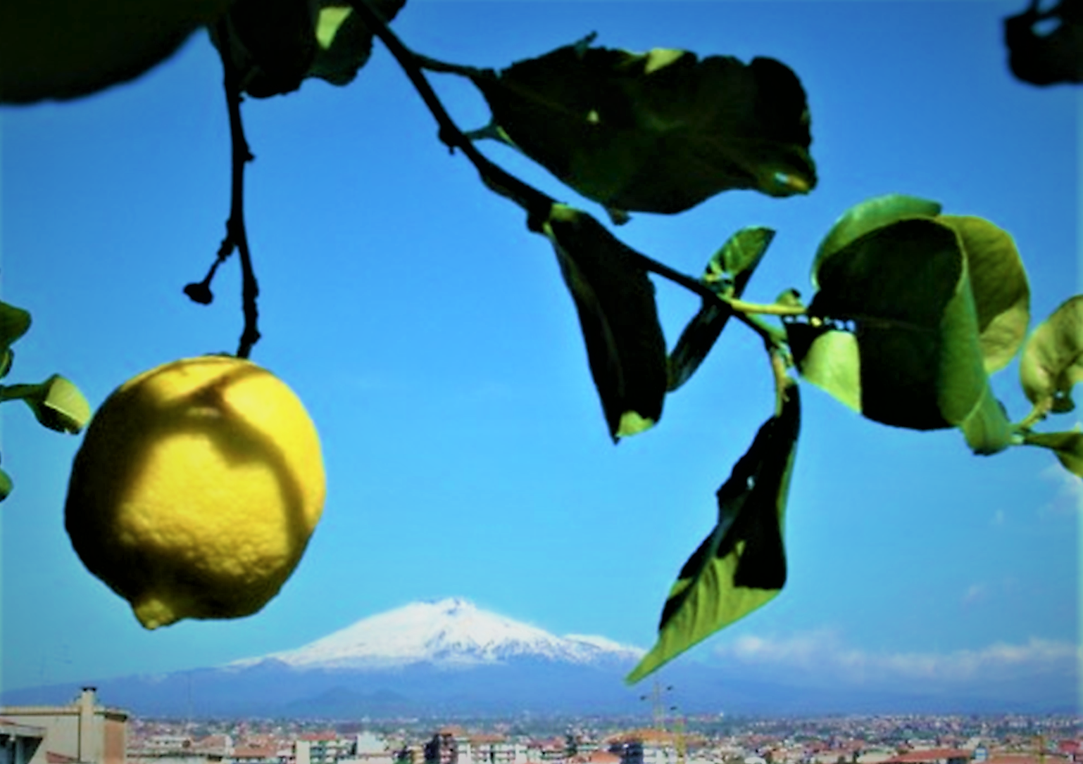 Limone dell'Etna Igp