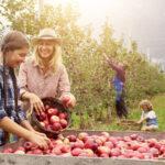 La spremuta di mela Leni's con Bergamotto
