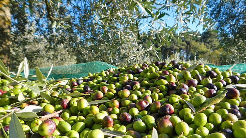 Montelocco olio  extra vergine di oliva di  VENTURINI BALDINI