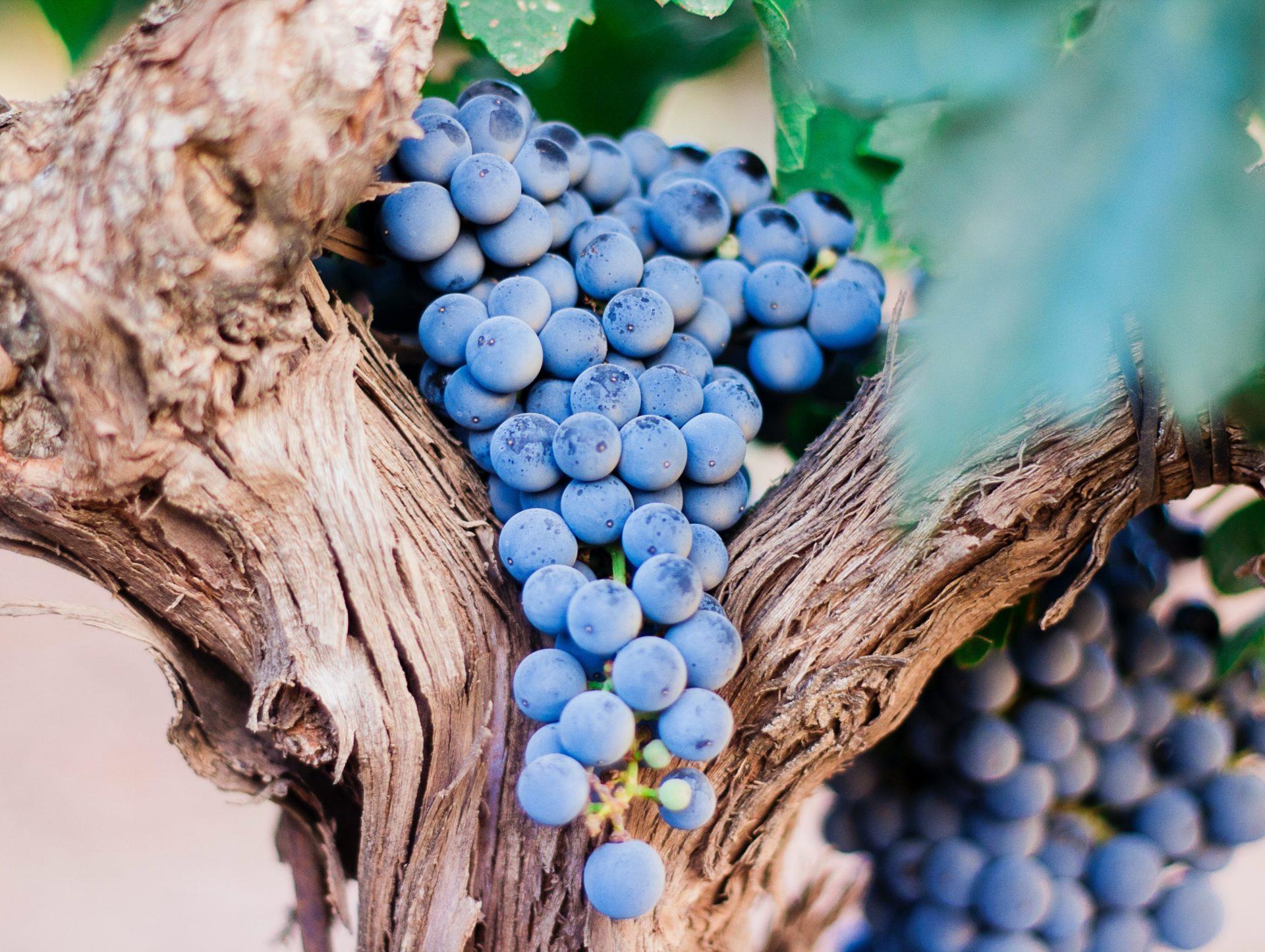 Giornate all'insegna del vino perfetto!