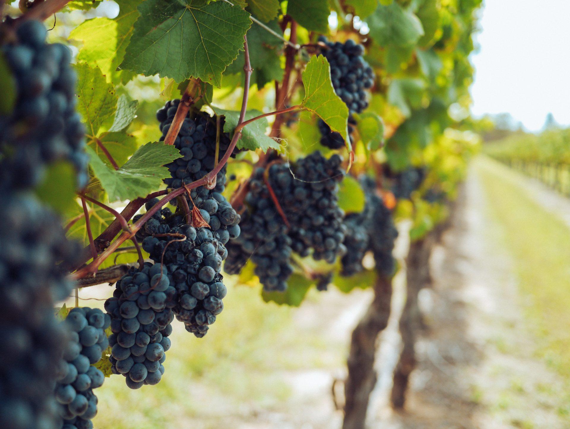 Festa dei vini autoctoni del Piemonte