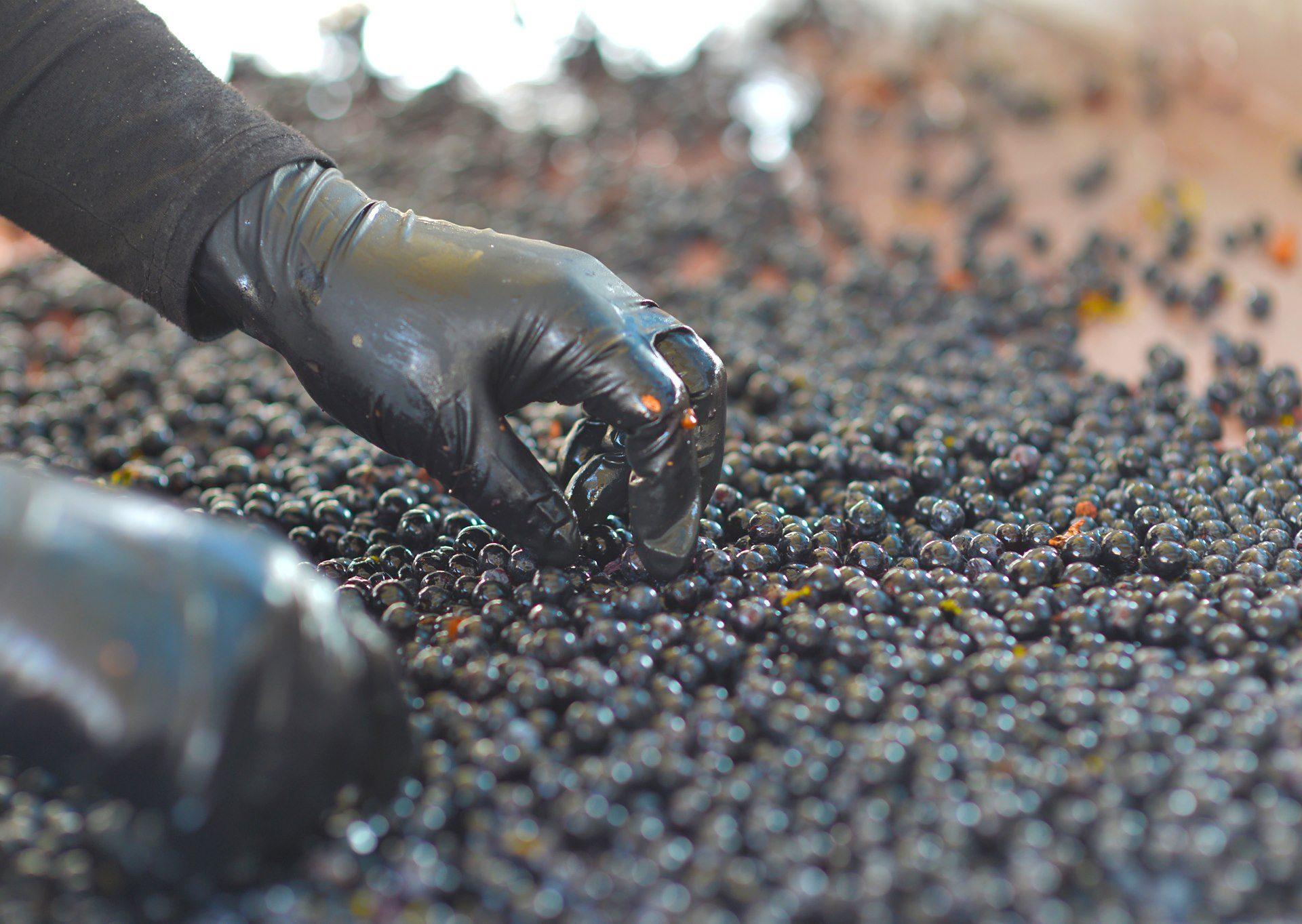 Un vino storico, prestigioso ed elegante